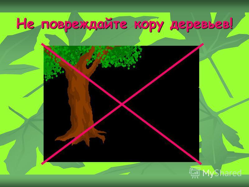 Не повреждайте кору деревьев!