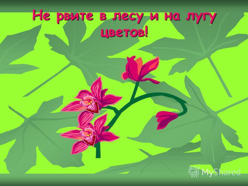 Не рвите в лесу и на лугу цветов!
