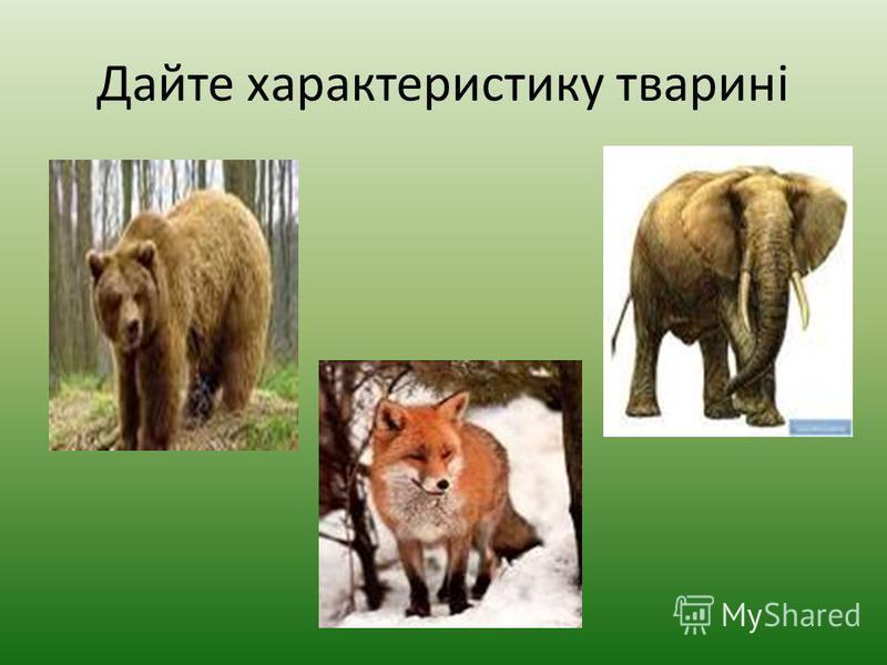 Всеїдні тварини Всеїдні тварини – це тварини, які вживають їжу рослинного і тваринного походження.