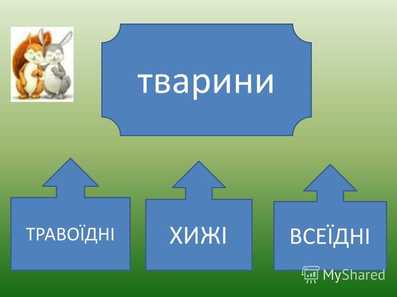 За способом живлення, тобто за тим, яку їжу тварини вживають, їх поділяють на різні групи.