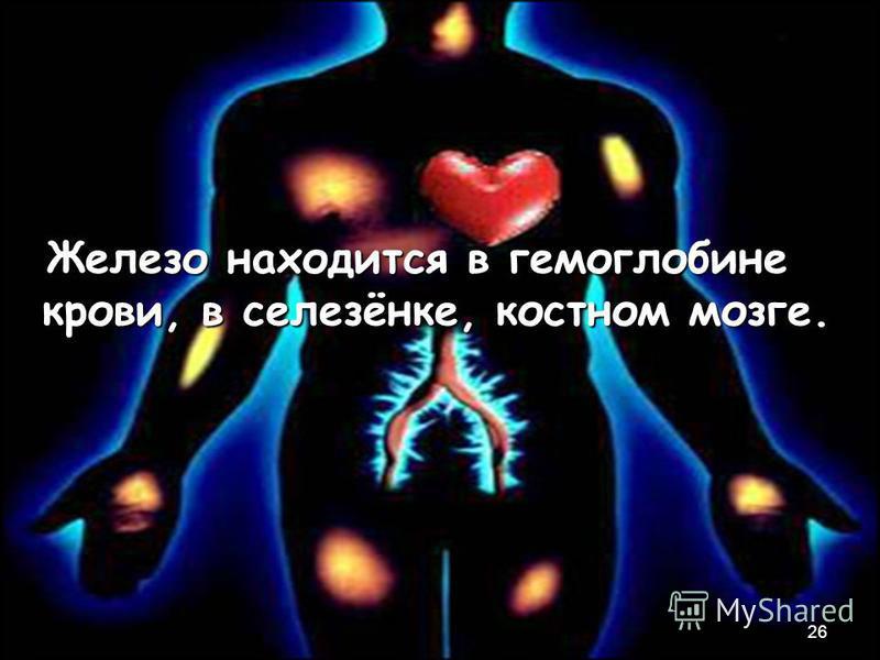 Железо находится в гемоглобине крови, в селезёнке, костном мозге. Железо находится в гемоглобине крови, в селезёнке, костном мозге. 26