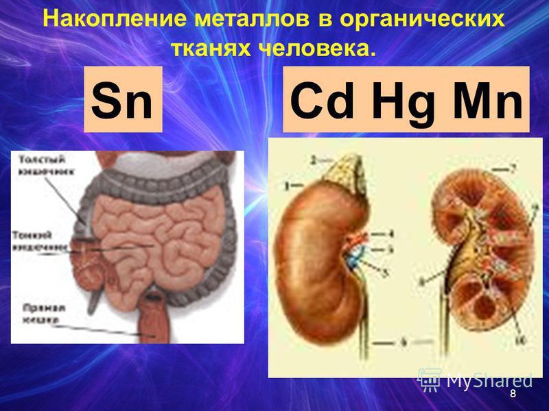 SnCd Hg Mn Накопление металлов в органических тканях человека. 8
