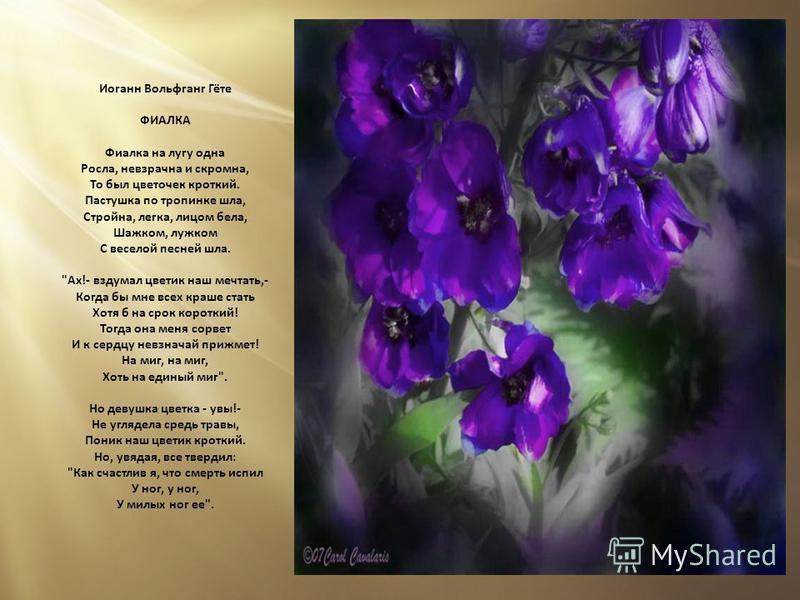 Иоганн Вольфганг Гёте ФИАЛКА Фиалка на лугу одна Росла, невзрачна и скромна, То был цветочек кроткий. Пастушка по тропинке шла, Стройна, легка, лицом бела, Шажком, лужком С веселой песней шла.