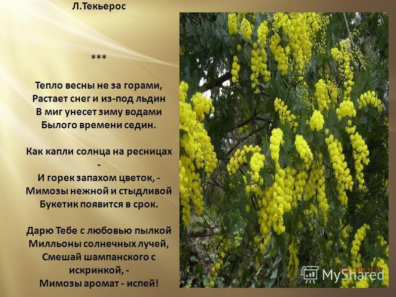 Цветы и слезы мечты и грезы