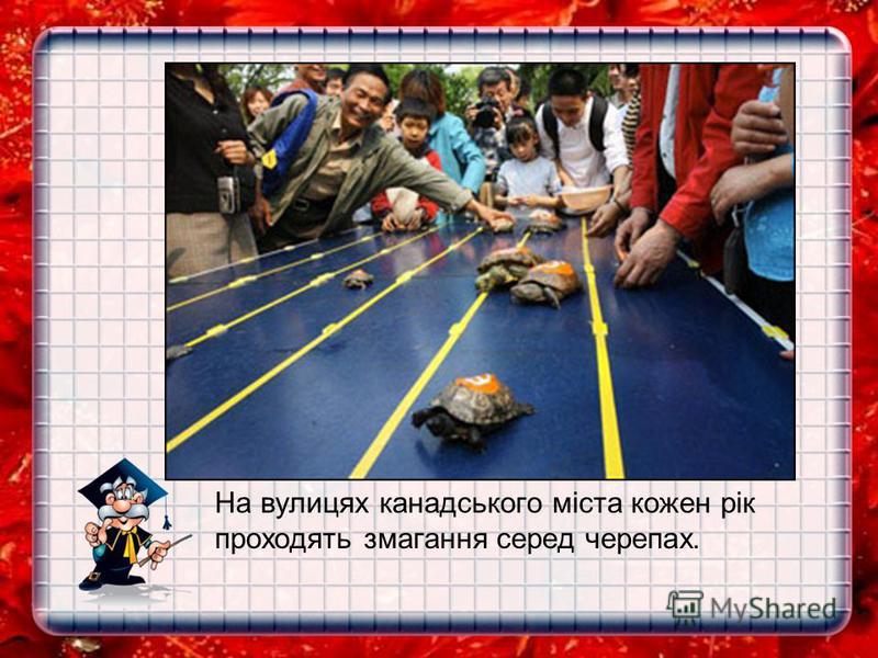 На вулицях канадського міста кожен рік проходять змагання серед черепах.