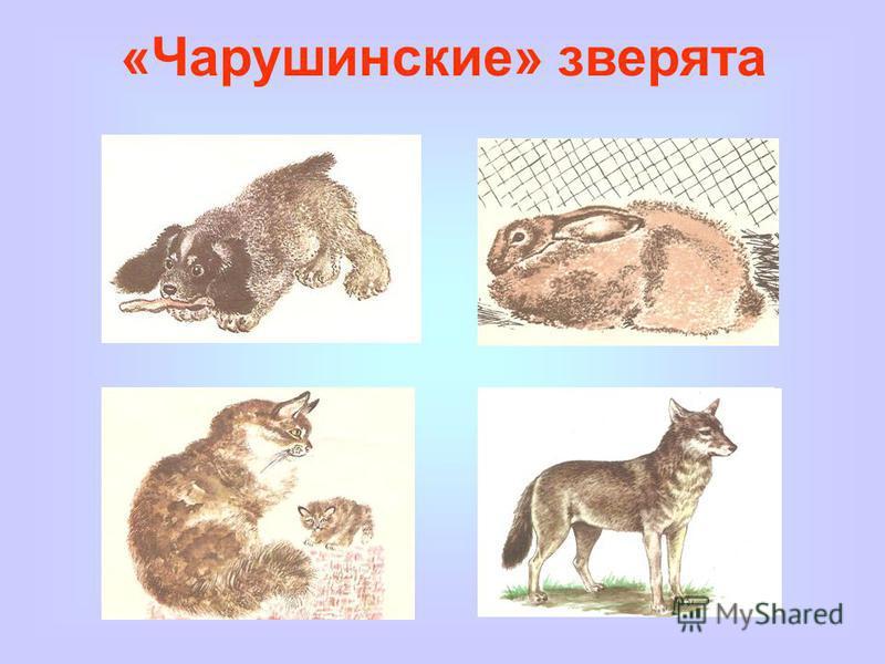 «Чарушинские» зверята