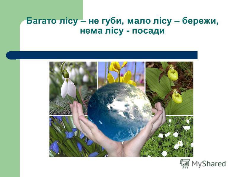 Багато лісу – не губи, мало лісу – бережи, нема лісу - посади