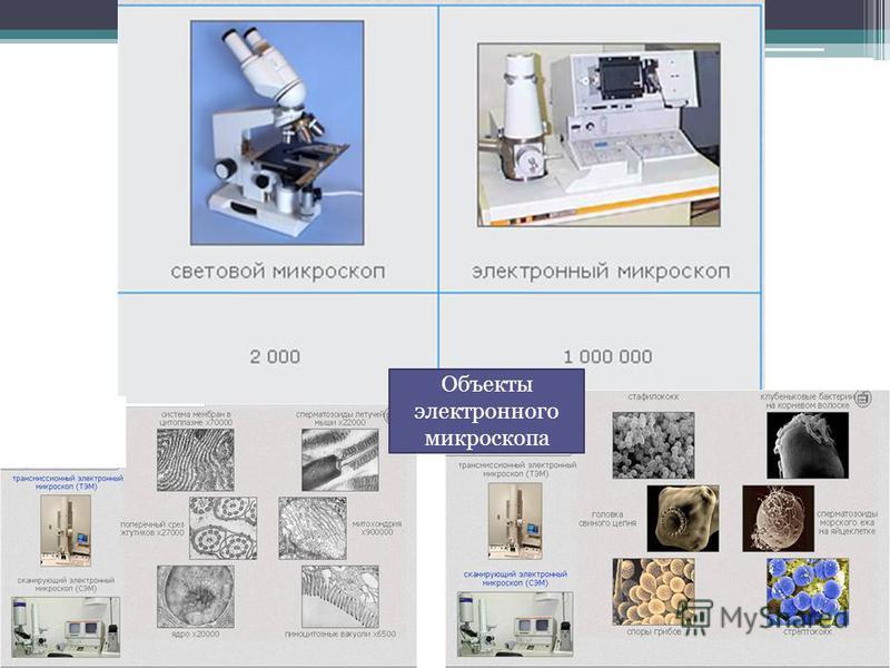 Объекты электронного микроскопа
