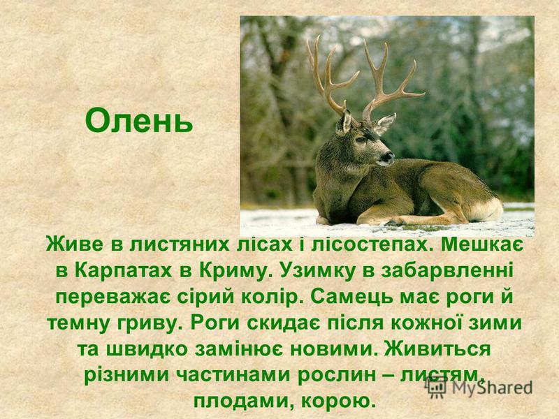 Олень Живе в листяних лісах і лісостепах. Мешкає в Карпатах в Криму. Узимку в забарвленні переважає сірий колір. Самець має роги й темну гриву. Роги скидає після кожної зими та швидко замінює новими. Живиться різними частинами рослин – листям, плодам