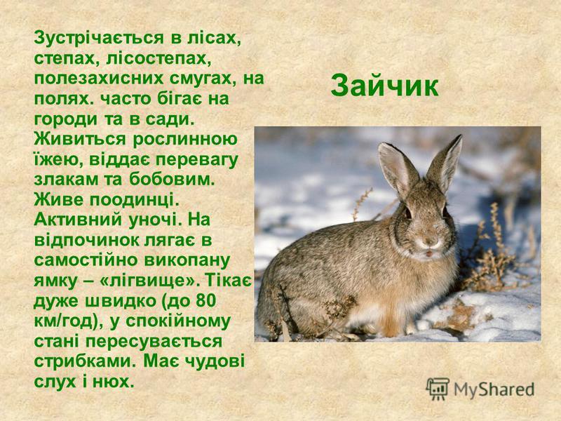 Зайчик Зустрічається в лісах, степах, лісостепах, полезахисних смугах, на полях. часто бігає на городи та в сади. Живиться рослинною їжею, віддає перевагу злакам та бобовим. Живе поодинці. Активний уночі. На відпочинок лягає в самостійно викопану ямк