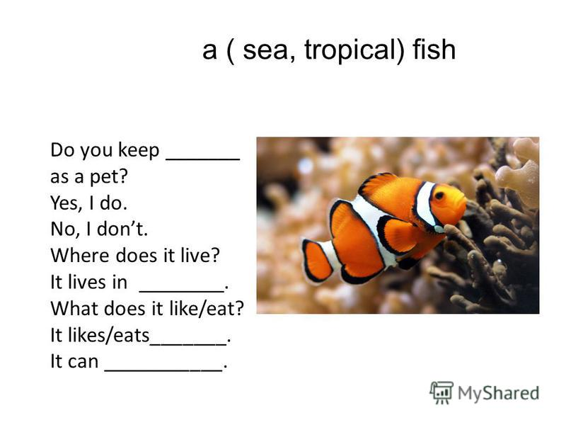 a ( sea, tropical) fish Do you keep _______ as a pet? Yes, I do. No, I dont. Where does it live? It lives in ________. What does it like/eat? It likes/eats_______. It can ___________.