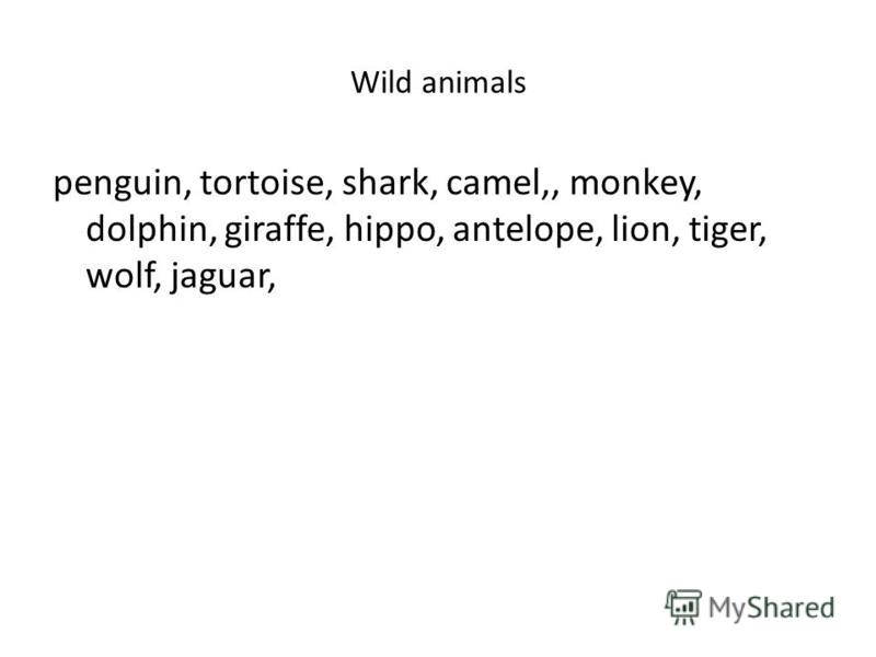 Wild animals penguin, tortoise, shark, camel,, monkey, dolphin, giraffe, hippo, antelope, lion, tiger, wolf, jaguar,