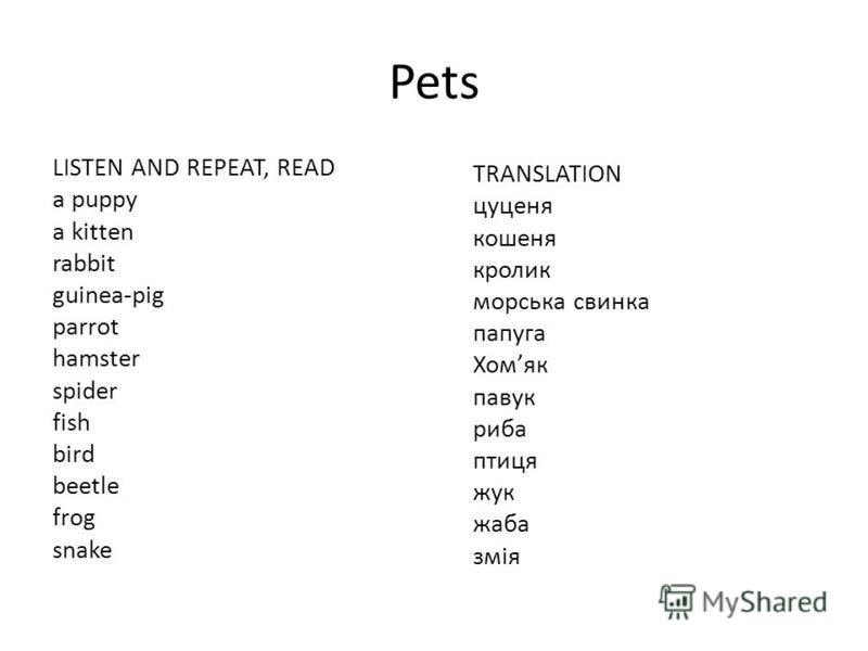 Pets LISTEN AND REPEAT, READ a puppy a kitten rabbit guinea-pig parrot hamster spider fish bird beetle frog snake TRANSLATION цуценя кошеня кролик морська свинка папуга Хомяк павук риба птиця жук жаба змія