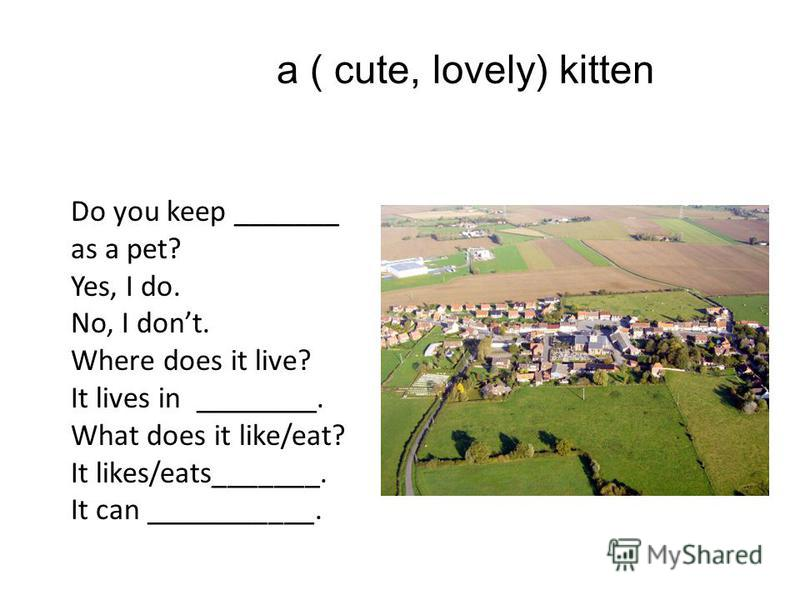 a ( cute, lovely) kitten Do you keep _______ as a pet? Yes, I do. No, I dont. Where does it live? It lives in ________. What does it like/eat? It likes/eats_______. It can ___________.