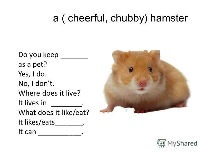 a ( cheerful, chubby) hamster Do you keep _______ as a pet? Yes, I do. No, I dont. Where does it live? It lives in ________. What does it like/eat? It likes/eats_______. It can ___________.