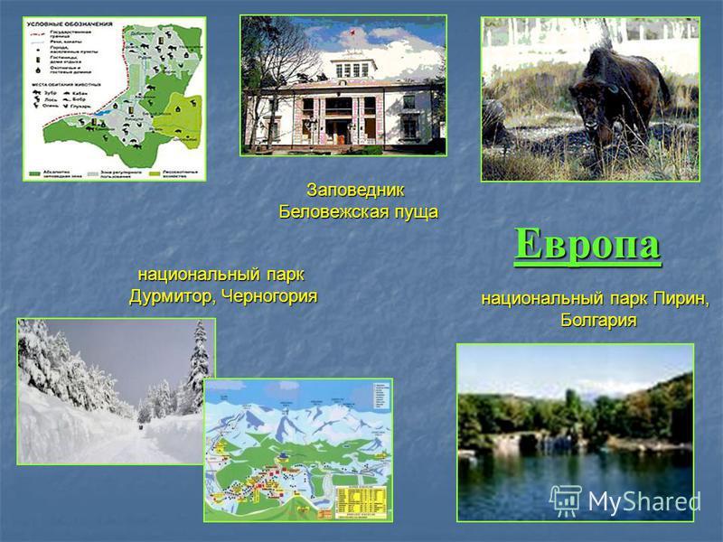 Европа Заповедник Беловежская пуща национальный парк Дурмитор, Черногория национальный парк Пирин, Болгария