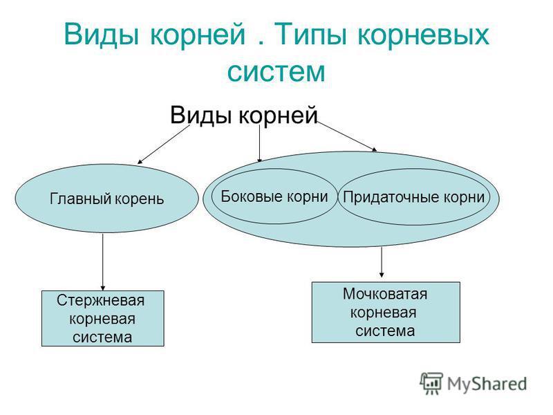 Виды корней. Типы корневых систем Виды корней Главный корень Боковые корни Придаточные корни Стержневая корневая система Мочковатая корневая система