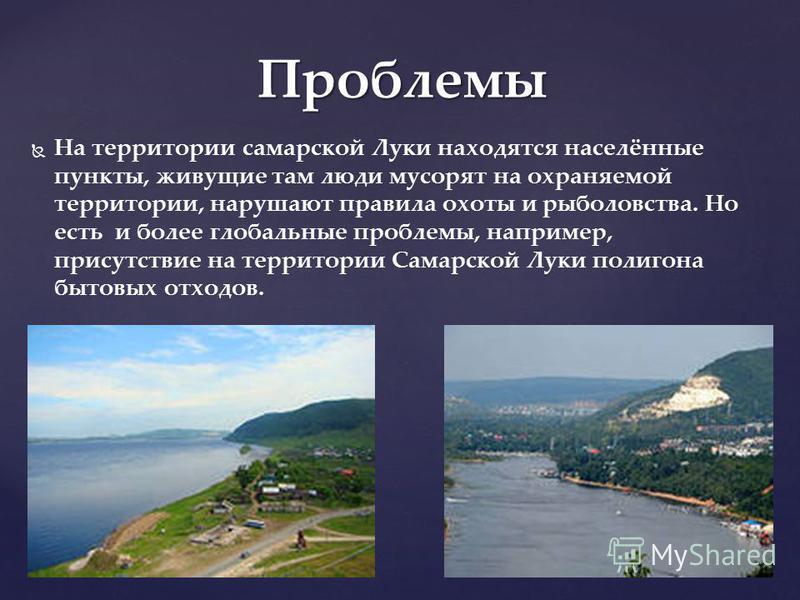 Животные Самарской Луки Наиболее многочисленны: лось, кабан, барсук, белка, лисица, ёж, волк