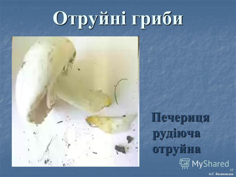 Отруйні гриби Печериця рудіюча отруйна Печериця рудіюча отруйна 17 А.С. Василевська