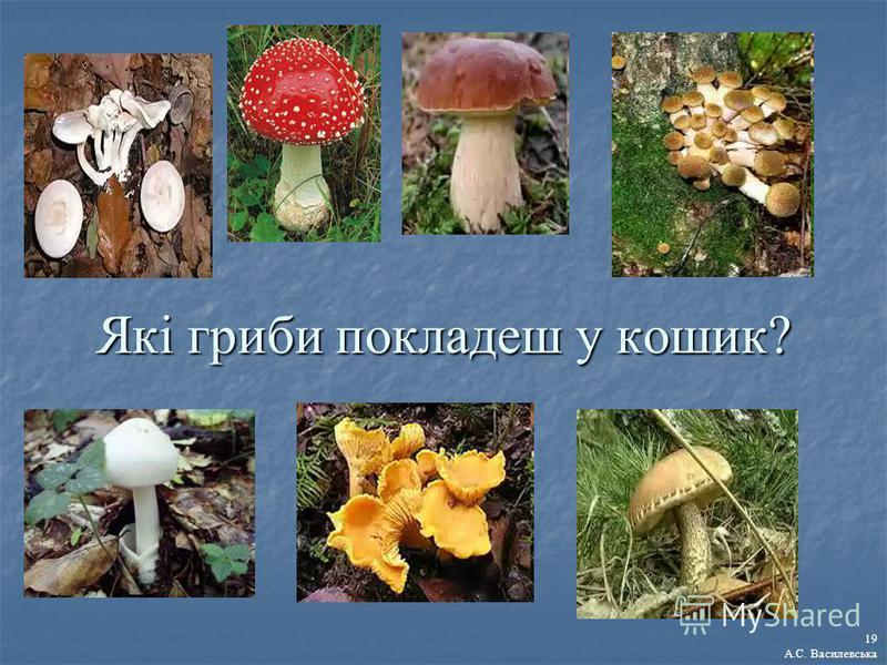 Які гриби покладеш у кошик? 19 А.С. Василевська