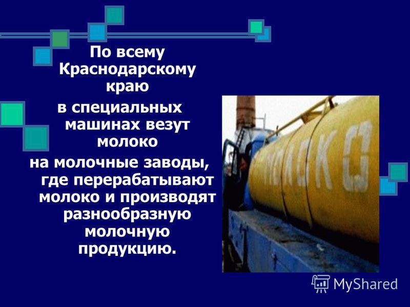 По всему Краснодарскому краю в специальных машинах везут молоко на молочные заводы, где перерабатывают молоко и производят разнообразную молочную продукцию.