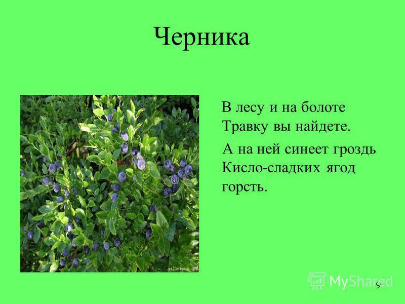 Черника В лесу и на болоте Травку вы найдете. А на ней синеет гроздь Кисло-сладких ягод горсть. 9
