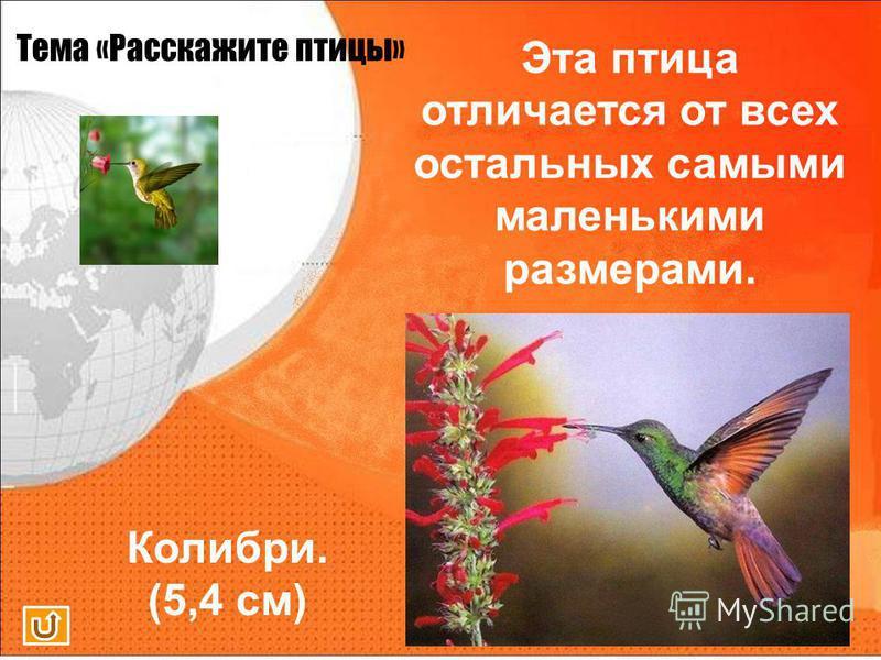 Тема «Расскажите птицы» Эта птица отличается от всех остальных самыми маленькими размерами.