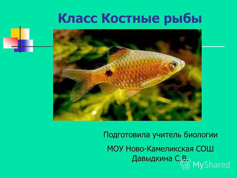 Класс Костные рыбы Подготовила учитель биологии МОУ Ново-Камеликская СОШ Давыдкина С.В.