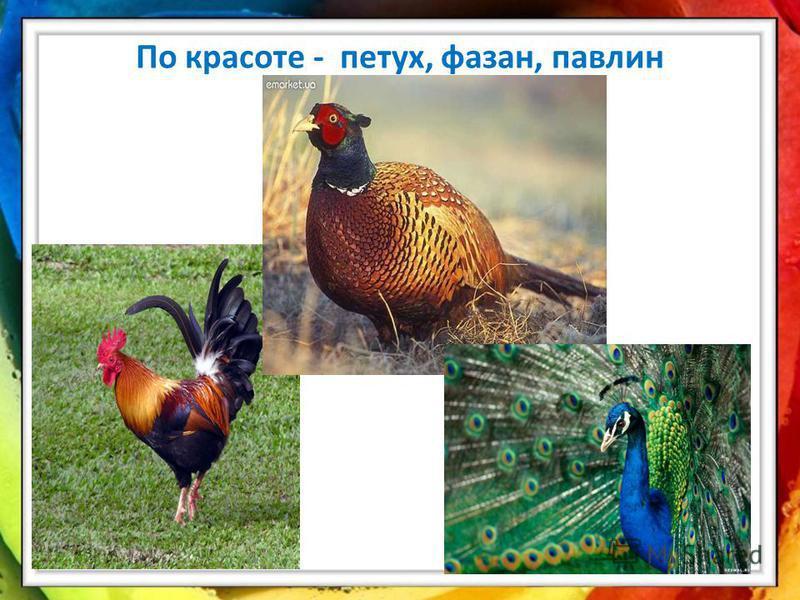 По красоте - петух, фазан, павлин