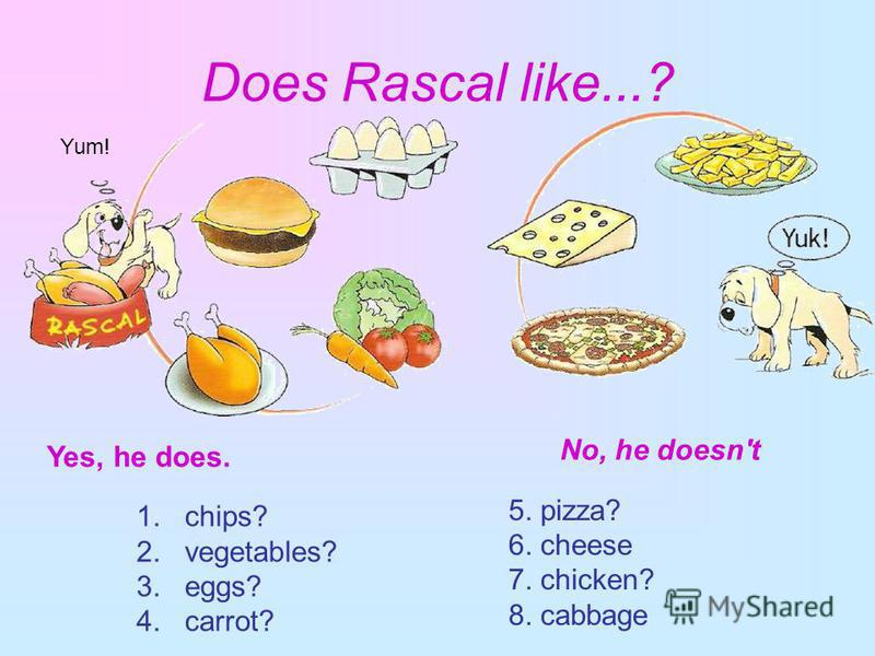 Does Rascal like...? Yes, 1. chips? 2. vegetables? 3. eggs? 4. carrot? 5. pizza? 6. cheese 7. chicken? 8. cabbage Yes, he does. No, he doesn't Yum!