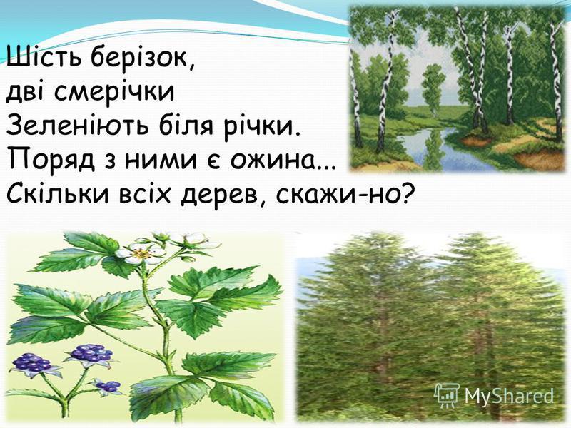 Шість берізок, дві смерічки Зеленіють біля річки. Поряд з ними є ожина... Скільки всіх дерев, скажи-но?