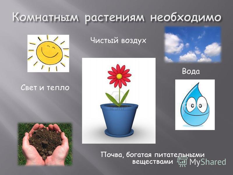 Свет и тепло Вода Почва, богатая питательными веществами Чистый воздух