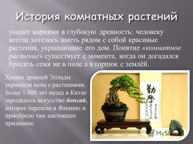 уходит корнями в глубокую древность : человеку всегда хотелось иметь рядом с собой красивые растения, украшающие его дом. Понятие « комнатное растение » существует с момента, когда он догадался бросить семя не в поле а в горшок с землёй. Храмы древне