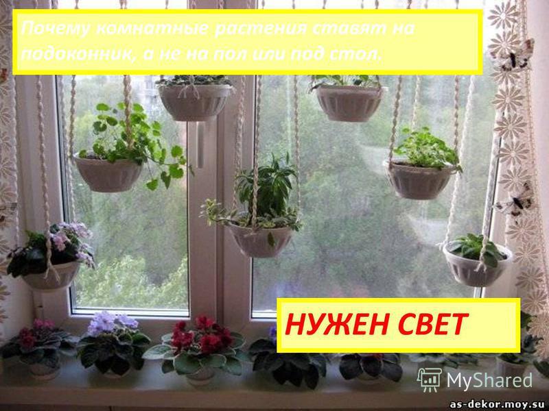 Почему комнатные растения ставят на подоконник, а не на пол или под стол. НУЖЕН СВЕТ