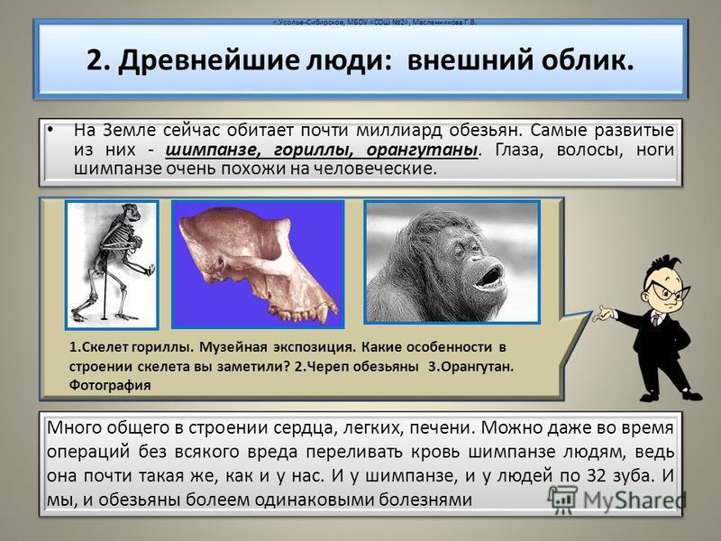 На Земле сейчас обитает почти миллиард обезьян. Самые развитые из них - шимпанзе, гориллы, орангутаны. Глаза, волосы, ноги шимпанзе очень похожи на человеческие. 2. Древнейшие люди: внешний облик. 1. Скелет гориллы. Музейная экспозиция. Какие особенн