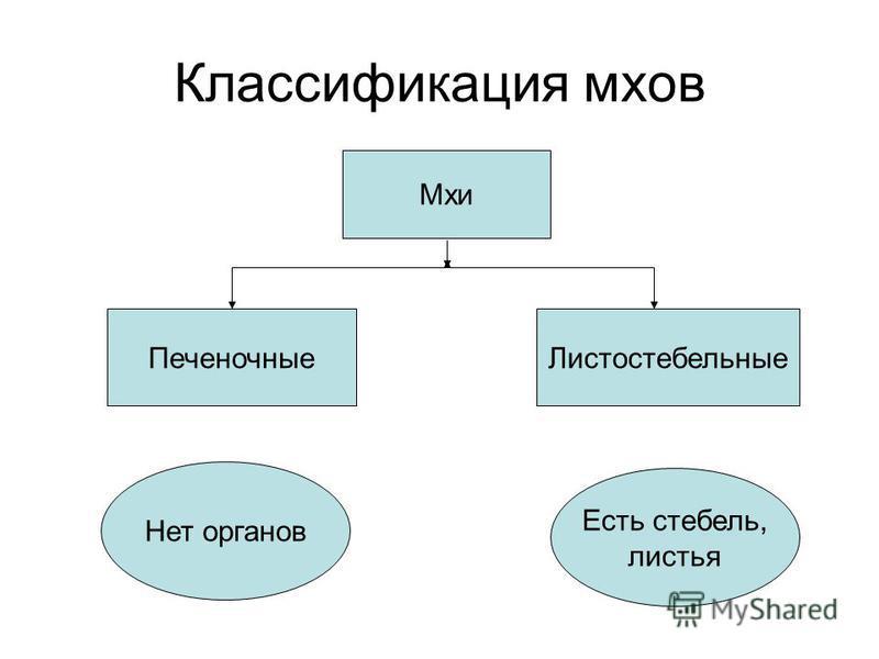 Классификация мхов Мхи Печеночные Листостебельные Нет органов Есть стебель, листья