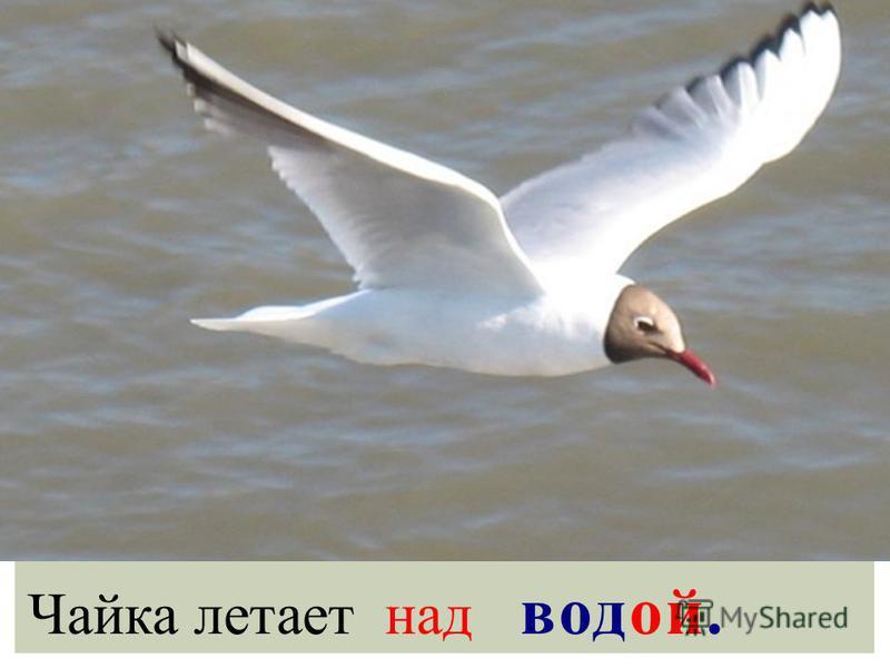 Чайка летает над водой.