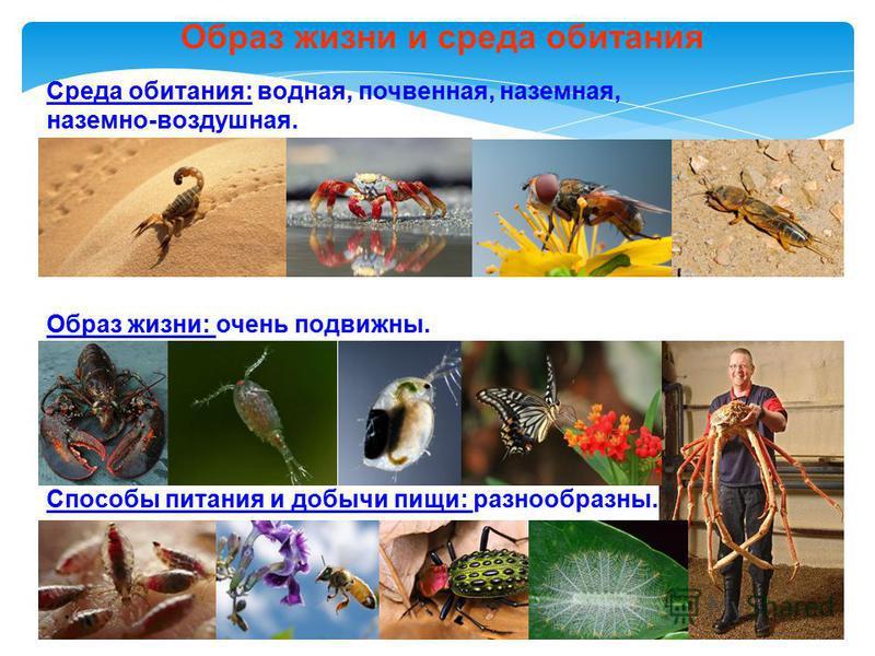 Среда обитания: водная, почвенная, наземная, наземно-воздушная. Образ жизни: очень подвижны. Способы питания и добычи пищи: разнообразны. Образ жизни и среда обитания