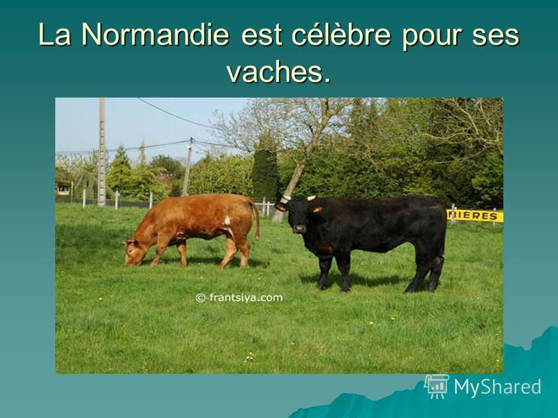 La Normandie est célèbre pour ses vaches.