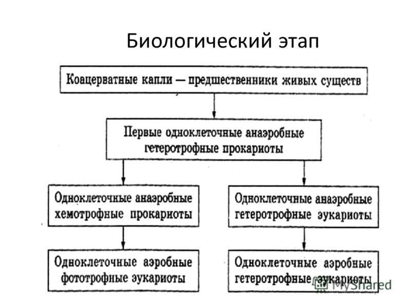 Биологический этап
