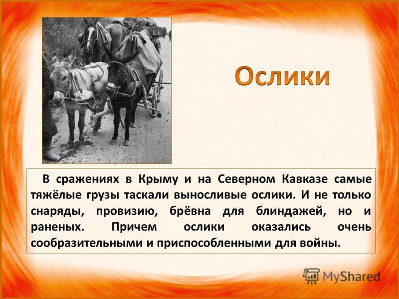 В сражениях в Крыму и на Северном Кавказе самые тяжёлые грузы таскали выносливые ослики. И не только снаряды, провизию, брёвна для блиндажей, но и раненых. Причем ослики оказались очень сообразительными и приспособленными для войны.