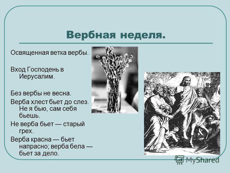 Вербная неделя. Освященная ветка вербы. Вход Господень в Иерусалим. Без вербы не весна. Верба хлест бьет до слез. Не я бью, сам себя бьешь. Не верба бьет старый грех. Верба красна бьет напрасно; верба бела бьет за дело.