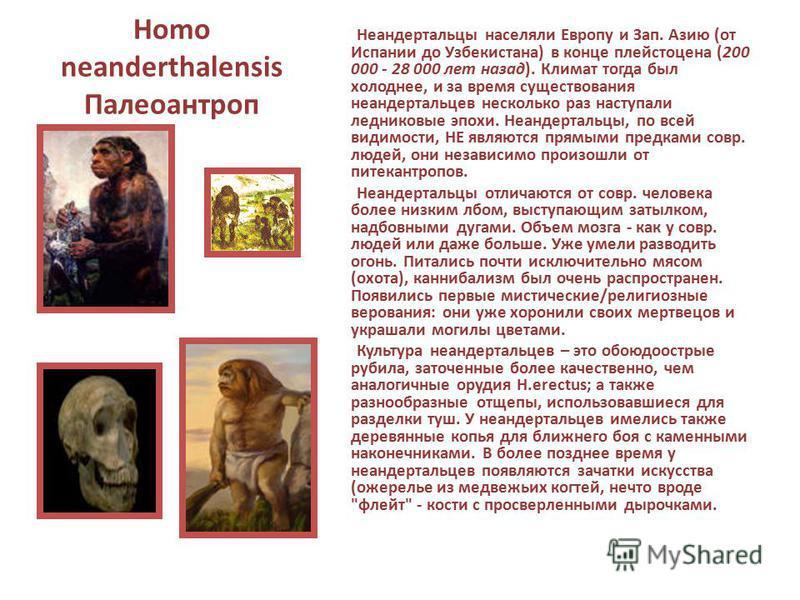 Homo neanderthalensis Палеоантроп Неандертальцы населяли Европу и Зап. Азию (от Испании до Узбекистана) в конце плейстоцена (200 000 - 28 000 лет назад). Климат тогда был холоднее, и за время существования неандертальцев несколько раз наступали ледни