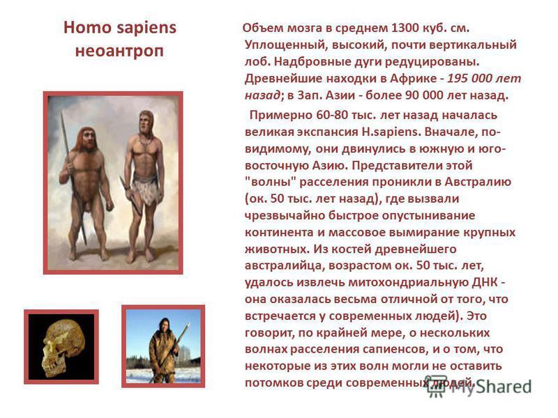 Homo sapiens неоантроп Объем мозга в среднем 1300 куб. см. Уплощенный, высокий, почти вертикальный лоб. Надбровные дуги редуцированы. Древнейшие находки в Африке - 195 000 лет назад; в Зап. Азии - более 90 000 лет назад. Примерно 60-80 тыс. лет назад