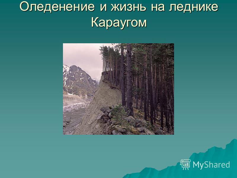 Оледенение и жизнь на леднике Караугом