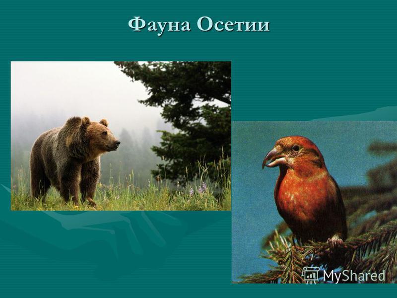 Фауна Осетии