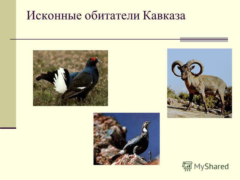 Исконные обитатели Кавказа