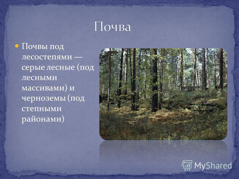 Почвы под лесостепями серые лесные (под лесными массивами) и черноземы (под степными районами)