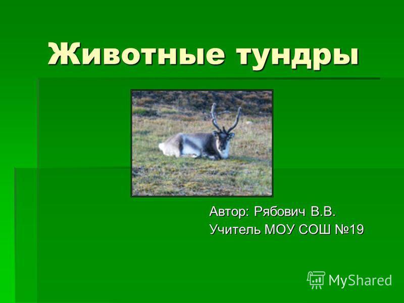 Животные тундры Автор: Рябович В.В. Учитель МОУ СОШ 19