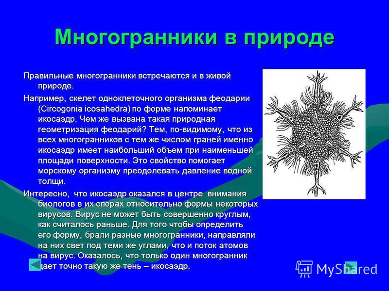 Многогранники в природе Правильные многогранники встречаются и в живой природе. Например, скелет одноклеточного организма феодарии (Circogonia icosahedra) по форме напоминает икосаэдр. Чем же вызвана такая природная геометризация феодарий? Тем, по-ви